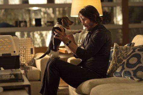 John Wick - Dog